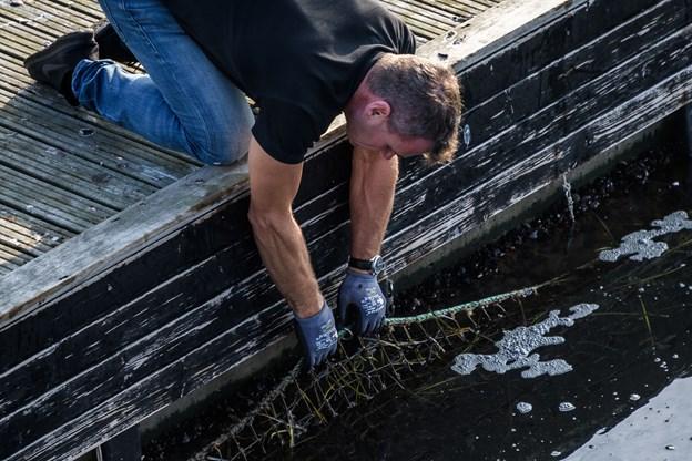 Arbejdsleder Miki Torp har hænderne godt nede i bassinet for at løsne og frigøre sikkerhedsnettet.