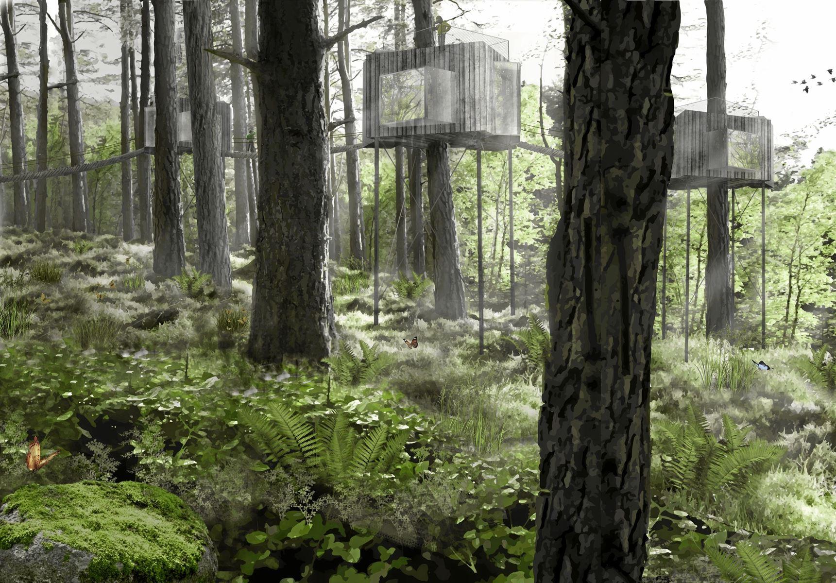 Fire iværksættere har længe drømt om at opføre en eksklusiv trætop-hytte i nåletræerne ved Als Odde. Nu kan tømrerne gå i gang.