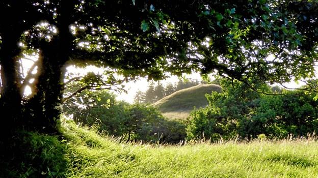 Tolne Skov ligger i et bakket istidslandskab med skov, hede og eng ved nordenden af Jyske Ås.