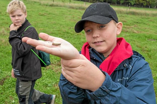 Christian var stolt, da han fandt en græshoppe, der ville sidde på hans hånd. Foto: Niels Helver