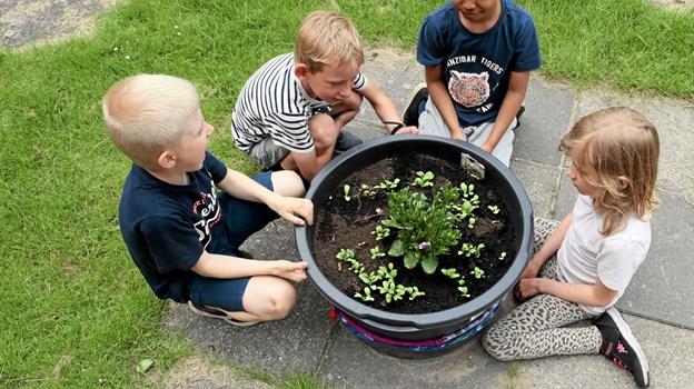 Gårdhavens planter skal blandt andet bruges i undervisningen. Foto: Allan Mortensen