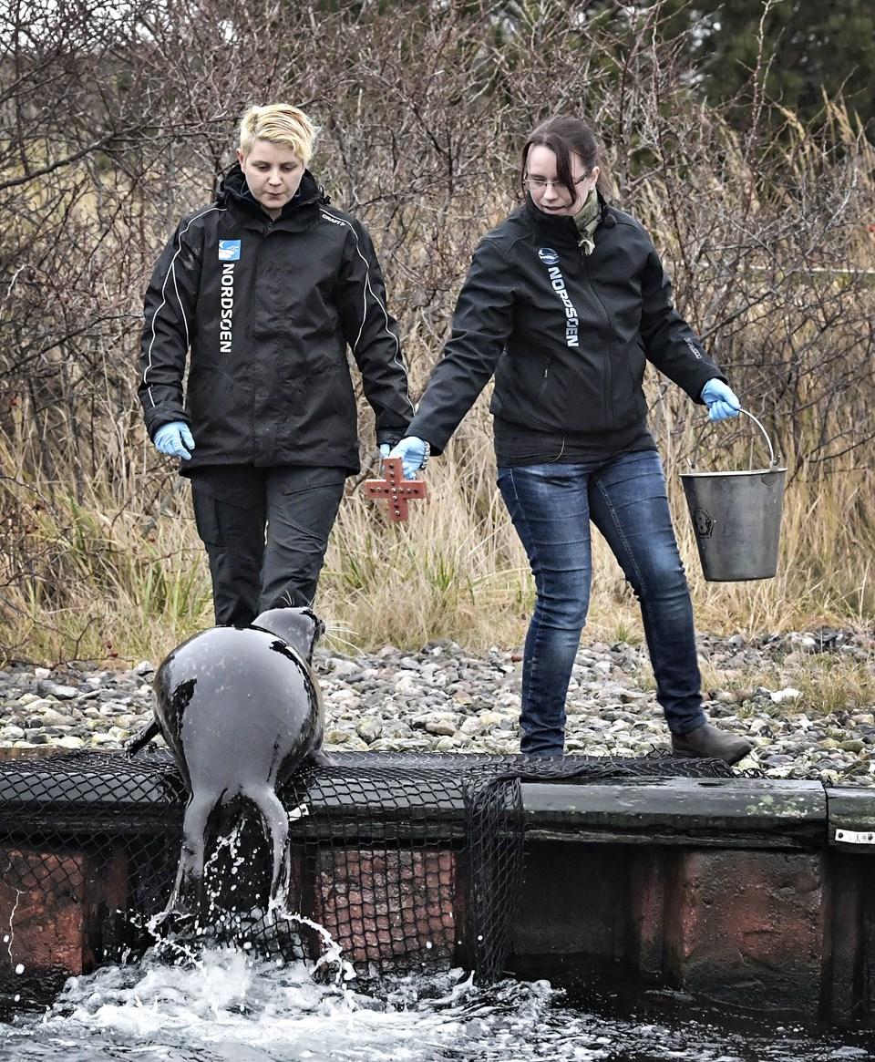 Som de andre sæler har Marina sit eget symbol, og når hun ser det, så kommer hun med det samme. Foto: Bent Bach