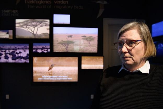 Trækfuglecentrets store udstilling er fortsat hovedattraktionen, og Lene Kappelborg skal udvikle arrangementer for eksempel udendørs. Foto: Peter Broen. Peter Broen