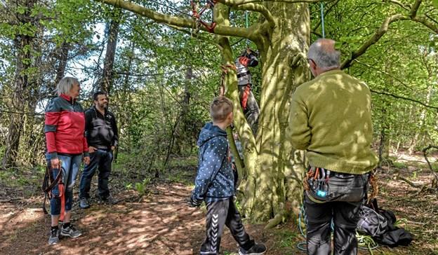 Træklatring inde i skoven med instruktør kunne man også prøve på dagen. Foto: Mogens Lynge Mogens Lynge