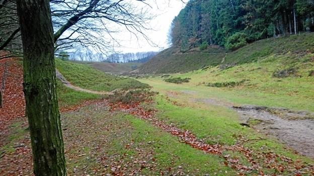 Foto: Dorit Glintborg. I skovens dybe, stille ro i Legind Bjerge.