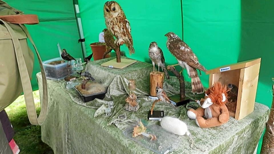 Spændende udstillinger i Naturluppens telt. Foto: Privat Privat