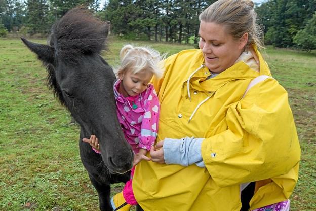 Friggs på 3 år og en kælen hest er blevet gode venner.   Foto: Niels Helver