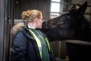 Et kys til muldyret: Betina går efter en fremtid i landbruget