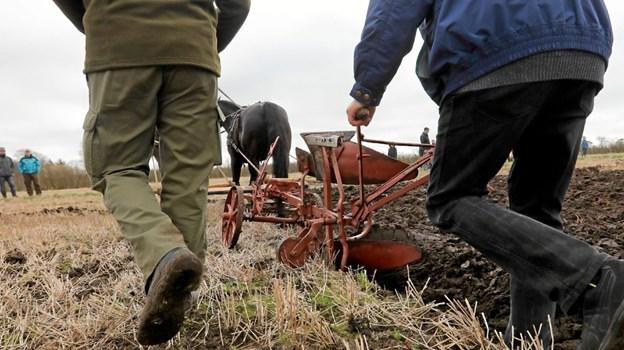 Vendsyssel Køreforening er vært ved pløjedagen 6. april. Foto: Allan Mortensen