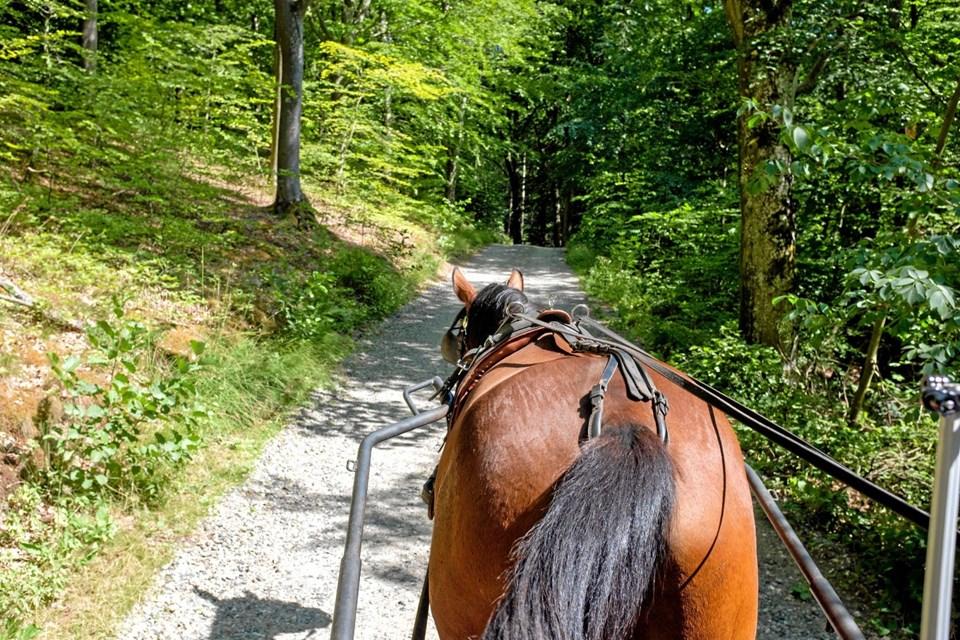 Oplev Tolne Skov fra hestevogn, hvor Peter Rasmussen fortæller historier undervejs. Foto: Niels Helver Niels Helver