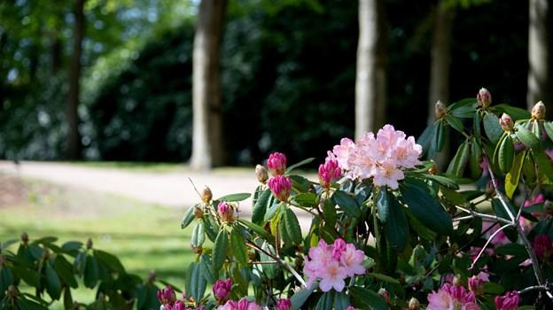 Biblioteket byder på fælles læseoplevelser i Rhododendronparken. Arkivfoto: Henrik Louis