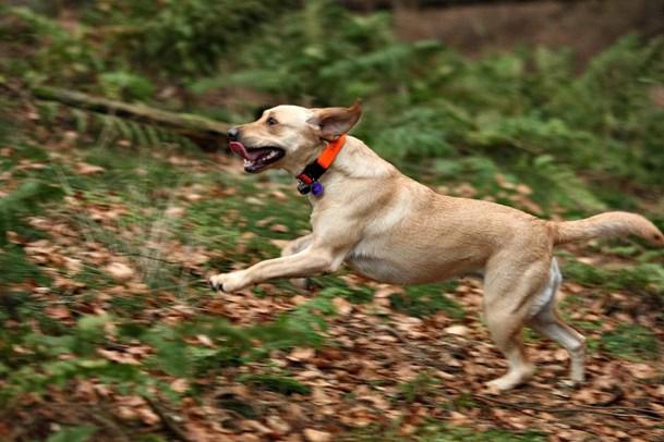 Fodboldbane i Ellidshøj bliver til hundeskov