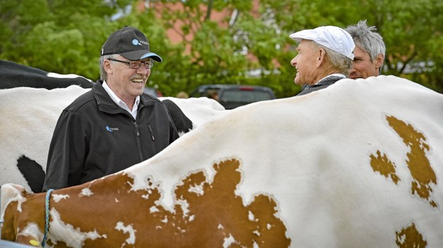 Et dyrskue handler også om at mødes landmænd imellem. En god snak over koryggen er ikke det værste. Foto: Ole Iversen Ole Iversen