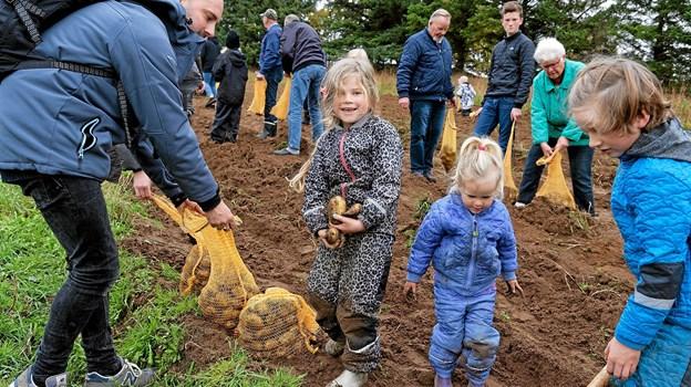 Kartoffeldagen er en populær dag for hele familien, og der er garanti for masser af frisk luft og sorte negle. Foto: Niels Helver