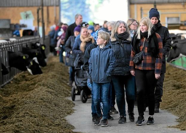Det var anden gang, der var inviteret til Arla Økodag på gården ved Holtet. Foto: Allan Mortensen Allan Mortensen