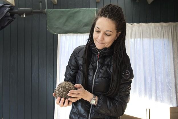 Tine Deth Christiansen driver på frivillig basis Pindsvinehjælpen Nordjylland for Dyrenes Beskyttelse. Arkivfoto: Laura Guldhammer