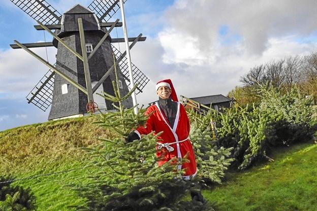 Juletræssælger Nisse-Jørn (Madsen) har faktisk leget og hjulpet i møllen som dreng. Jørns onkel Viggo Madsen drev møllen og han glemmer ikke de gode tider i møllen som dreng. Foto: Ole Iversen