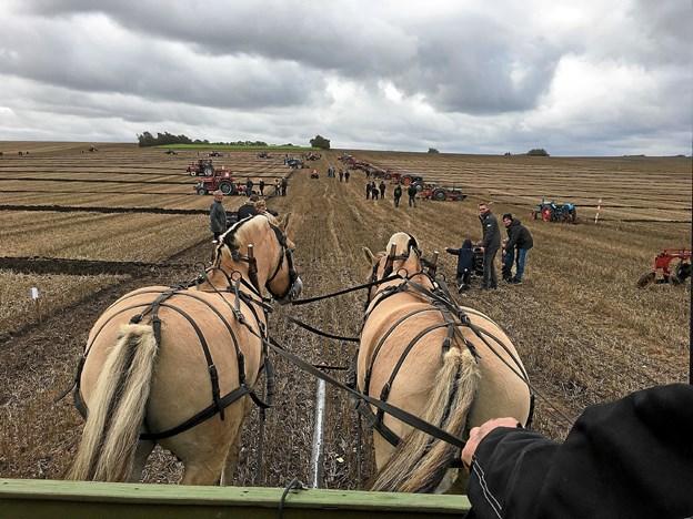 Hestepløjning og heste kørsel. Privatfoto