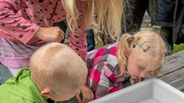 Børnene er meget interesseret i de fundne insekter. Foto: Niels Helver