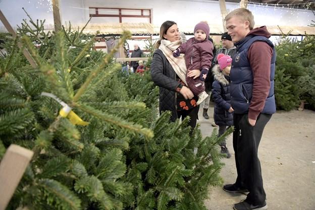 Ingen jul uden juletræ - og dem er Frederikshavn Y's Mens Club leveringsdygtige i. Arkivfoto: Bente Poder