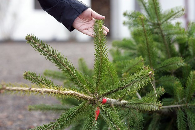 Hobro IK's Venner sælger juletræer de næste to weekender på DS Arena. Arkivfoto