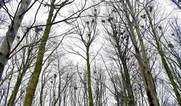 Jægere til møde om regulering af råger