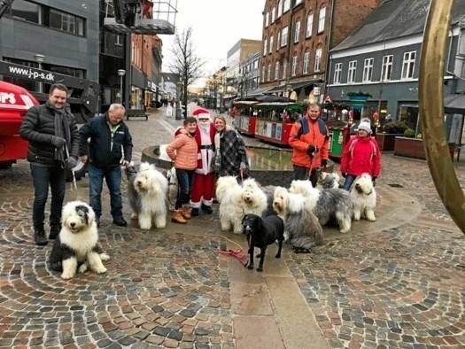 Man kan blandt andet møde disse dejlige hunde.