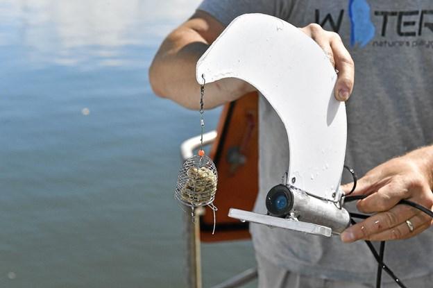 En lille kurv med uimodståelig madding gør, at fisk og bunddyr ikke kan holde sig væk.