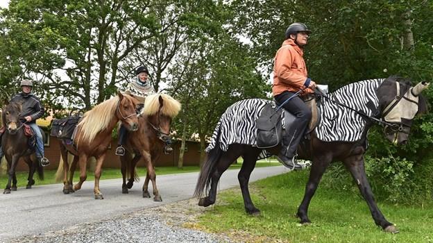 Der vil være islandske heste på fetspladsen. Foto: Ole Iversen