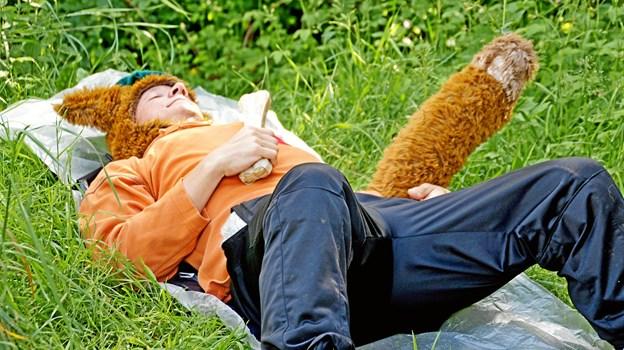 Den listige ræv sover rævesøvn.FOTO: HJ
