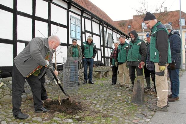 Villy Mougaard planter træet ved museet. Privatfoto.