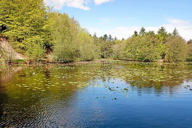 Naturen ved Tverstedsøerne bliver ikke smukkere, end den er lige nu. Foto: Niels Helver Niels Helver