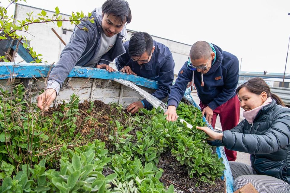 Steen S. Søholm, Kasper Emil Brandt, Miki Reimer og Kristiane Andersen er blandt de frivillige, der er involveret i Arctic Street Food. Foto: Teis Markfoged