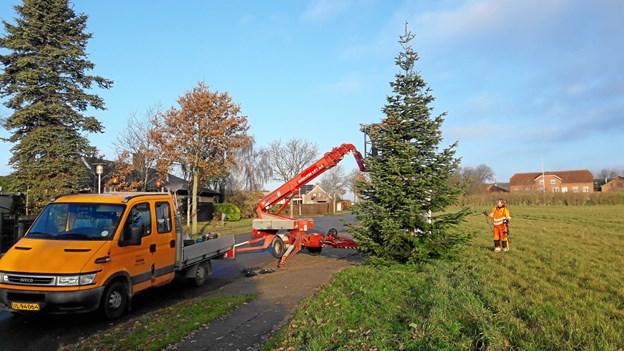 Så kom Park- og Vej forbi med årets juletræ. Privatfoto.
