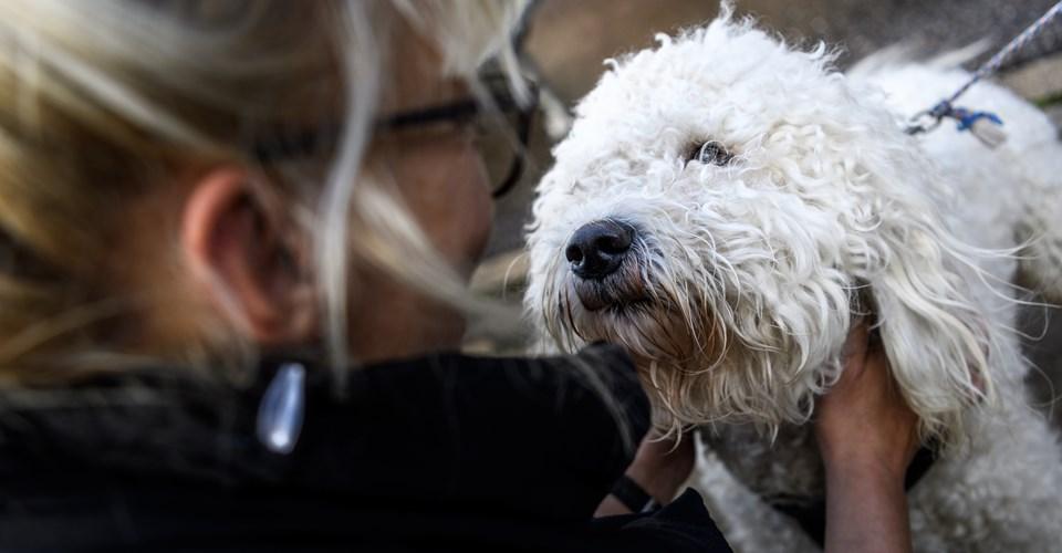 Der skal forskellige ting til at gøre nytårsaften mere behageligt for forskellige slags hunde.?Arkivfoto: Nicolas Cho Meier