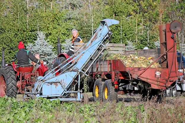Roerne bliver samlet op i vognen. Foto: Flemming Dahl Jensen