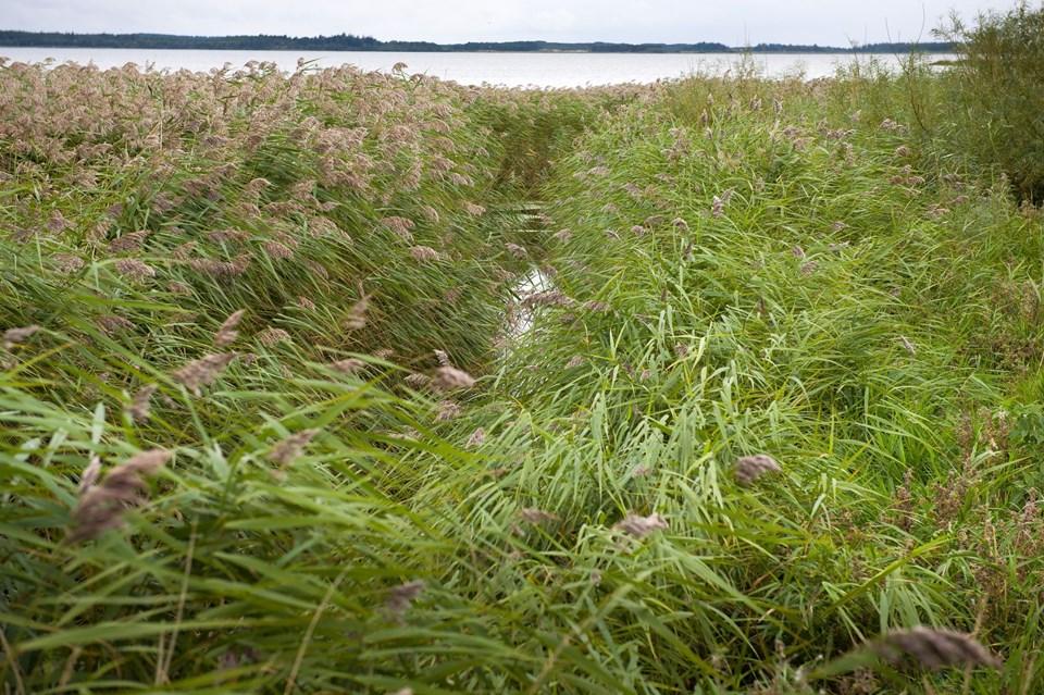 Efter forsalget skal der etableres en grussti langs nordsiden af denne afvandingskanal, der løber ud i Vandet Sø.   Foto: Bo Lehm