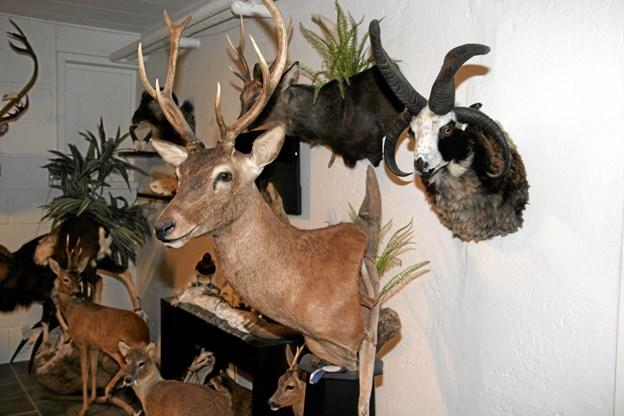 Der er mange spændende dyr som bliver udstoppet i Pandrup. Flemming Dahl Jensen
