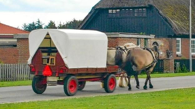 Yihaaa... en tur i hestevogn rundt i Klitmøller for de friske.Privatfoto Ole Iversen