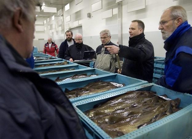 Flere torsk og færre rødspætter, kulmuler og kuller på fiskeaktionen i Hirtshals i 2018.   ?Arkivfoto: Bente Poder