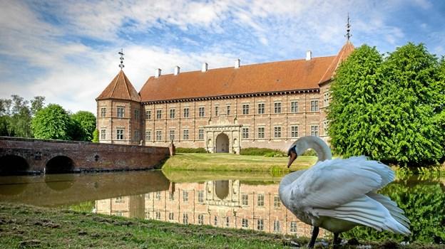 Selv svanen kan finde plads i påskeeventyret omkring Voergaard Slot.Privatfoto