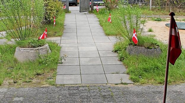 Den røde løber var taget frem i dagens anledning. Foto: Hans B. Henriksen