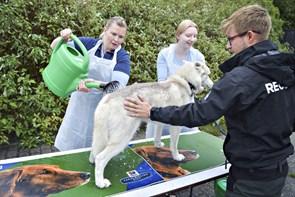 Dyrlægerne i Vendsyssel er altid på vagt