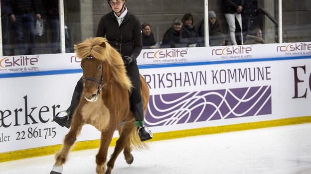 Istølt i Frederikshavn tiltrækker hele eliten, og i år var omkring halvdelen af rytterne fra udlandet. ?Foto: Andreas Falck