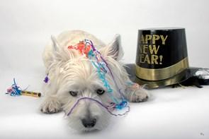 Nytårsfejring i hundehøjde