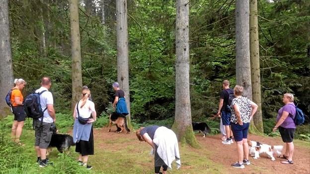 En guidet gåtur med hunde var også på programmet. Privatfoto Privat