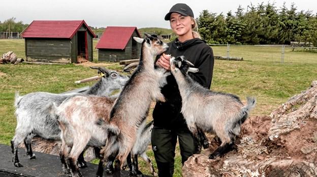 Sara Lassen fra Tornby, har som en del af uddannelsen som dyrepasser, fået en elevplads hos Fun Park Hirtshals. Foto: Peter Jørgensen Peter Jørgensen