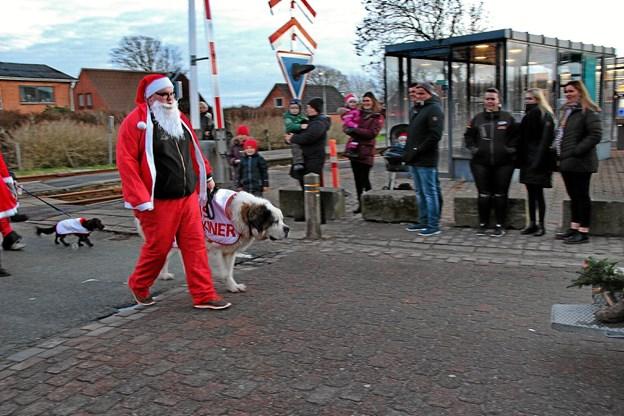 Der er forskel på hunde!- også på størrelsen! Foto: Hans B. Henriksen Hans B. Henriksen