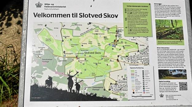 Tæt på informationstavlerne er også et informativt kort over Slotved Skov med QR kode til digital formidling. Foto: Niels Helver Niels Helver