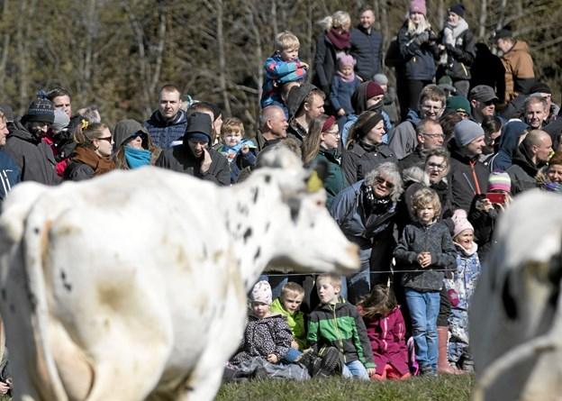 Omkring 3.000 gæster fandt vej til arrangementet i Holtet. Foto: Allan Mortensen Allan Mortensen